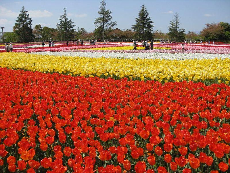 おやゆび姫もびっくり!180万株のチューリップが咲き乱れるなばなの里