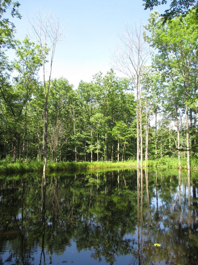 森の生命力を生かした庭