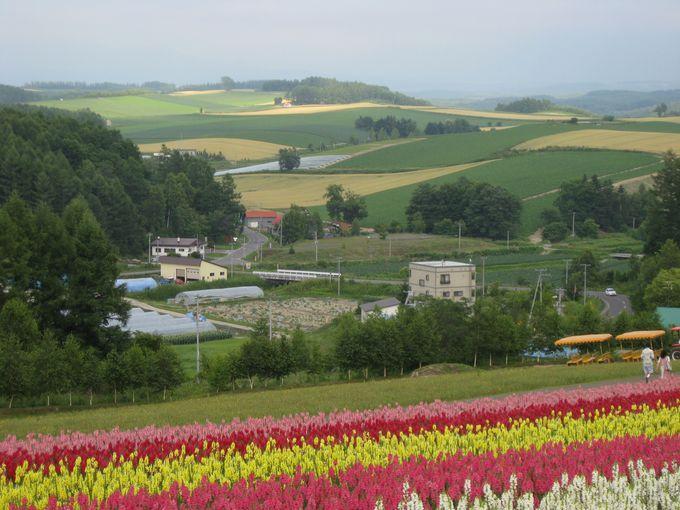 パッチワークに見える美瑛の丘