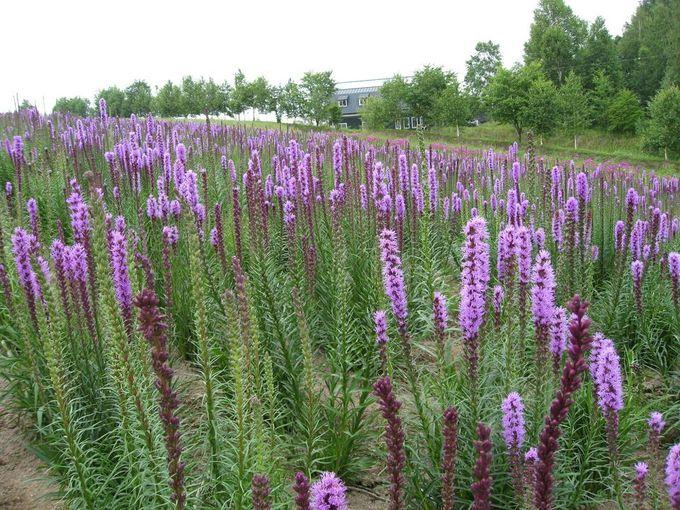 どこまでも続く色とりどりの花畑