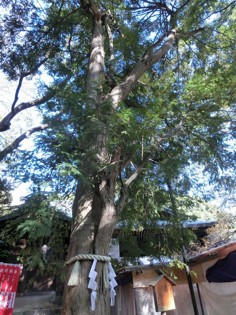 共生(ともいき)の木