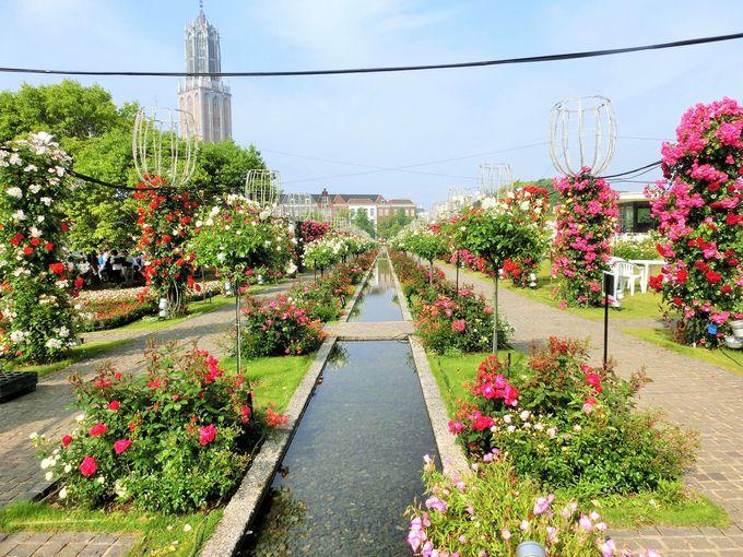 毎年春には100万本のバラ祭りが開催