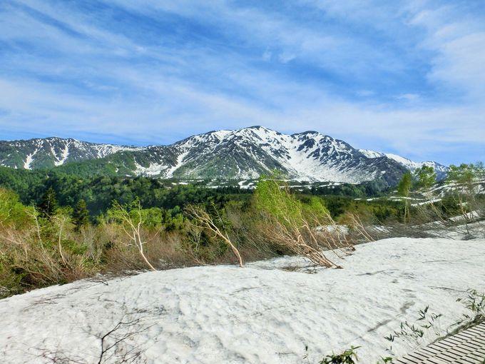 立山は、2450メートルまでは誰でも登れます
