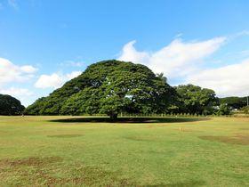 あのCMのロケ地!オアフ島「モアナルア・ガーデン」でこの木なんの木を探してみよう!