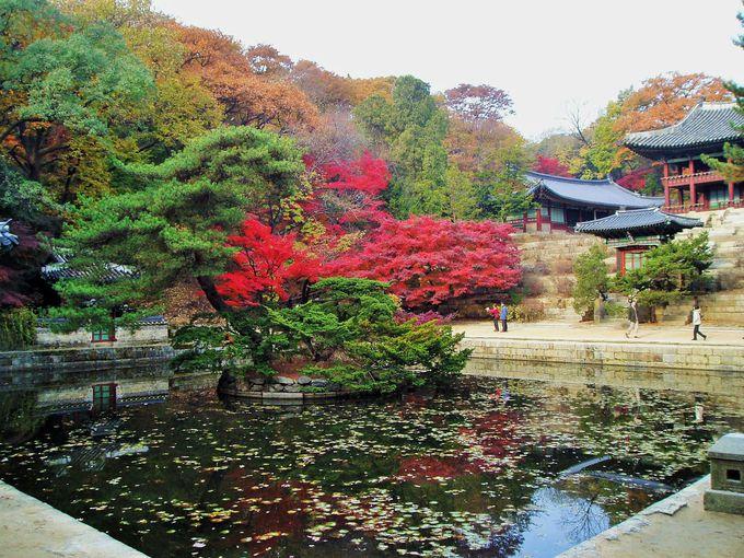 3.昌徳宮/韓国