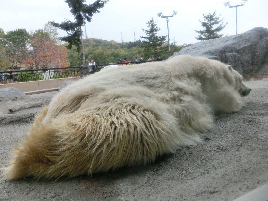 2.四季彩の丘/トンデンファーム/旭山動物園(北海道)
