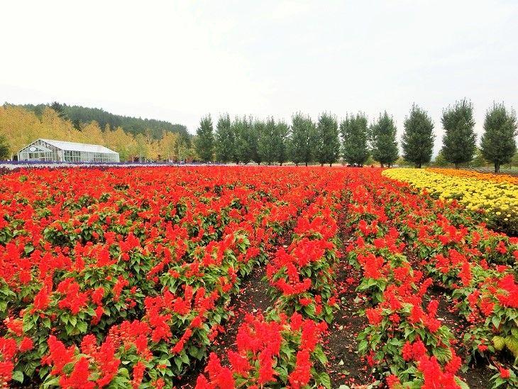 秋色の「花人の畑」