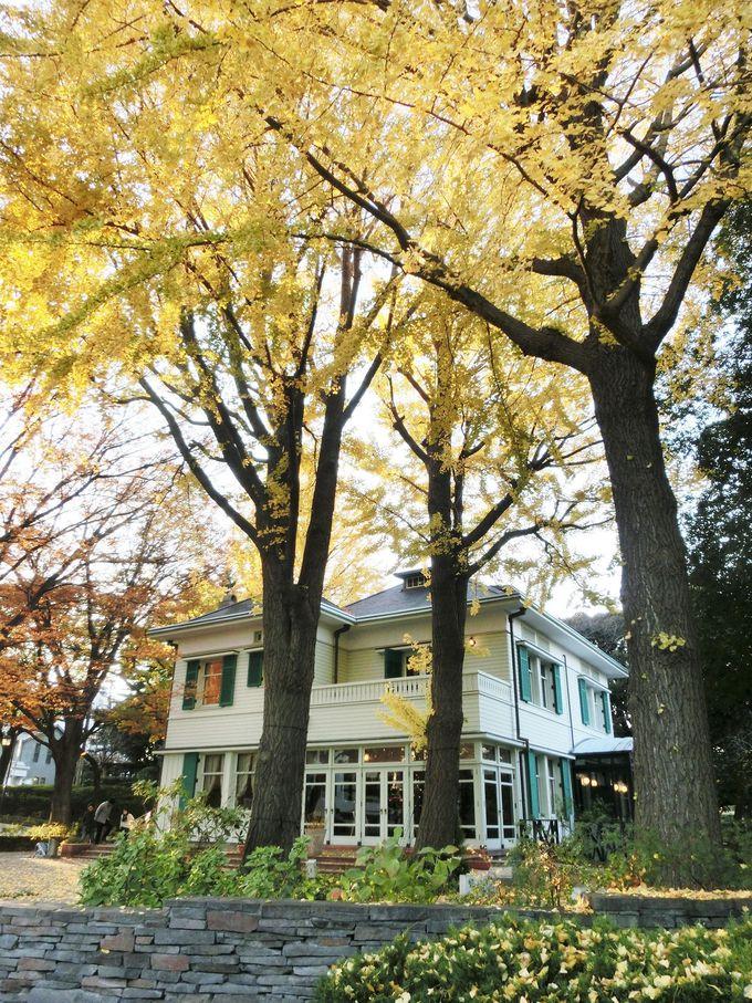 銀杏の黄葉が美しい「エリスマン邸」