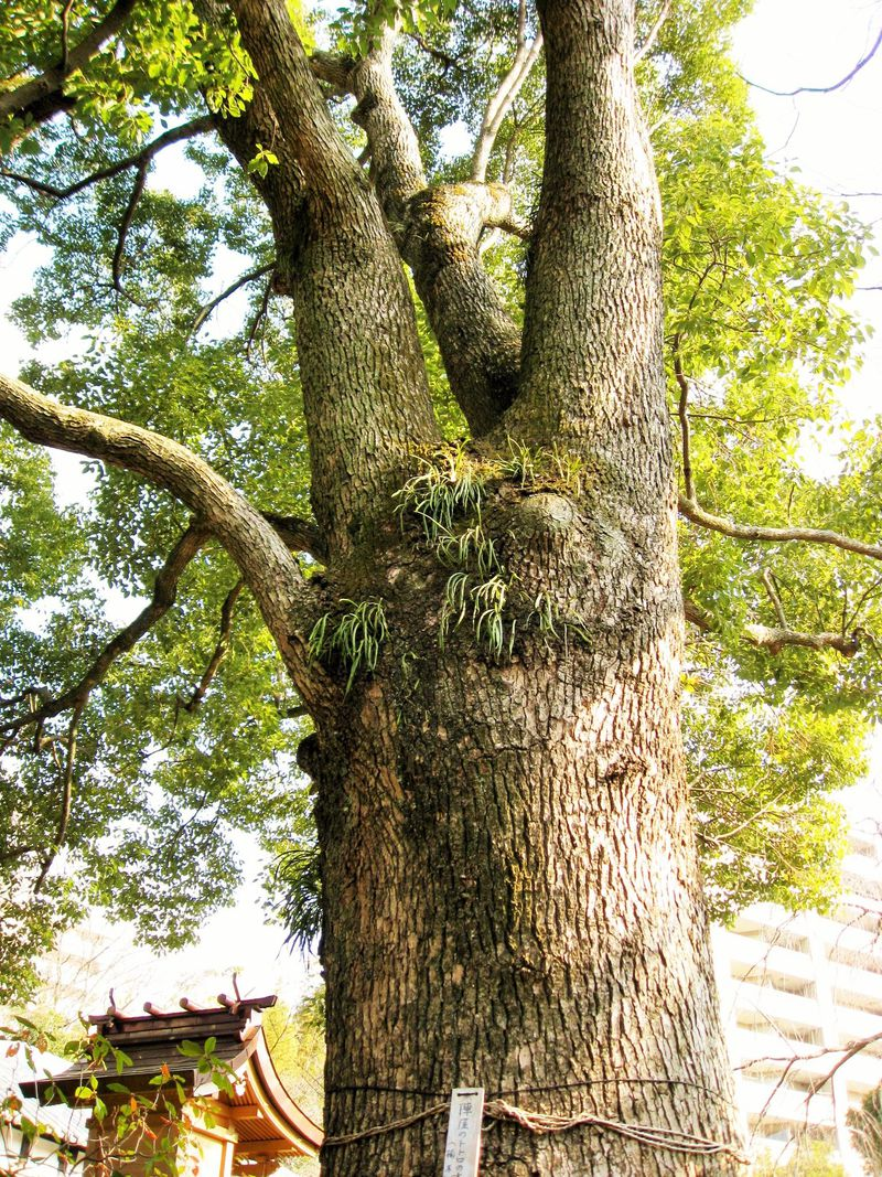 トトロの木もある!リニューアルした神奈川・元湯「陣屋」で日帰り温泉