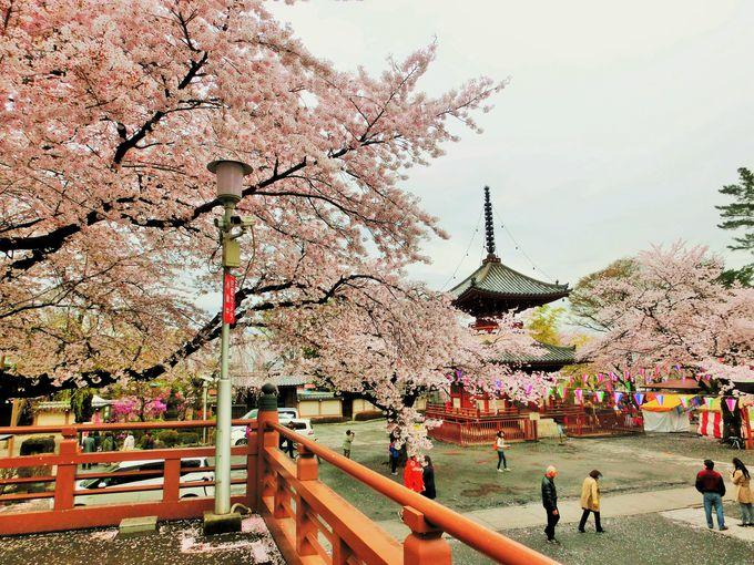 桜はここから眺めよう!