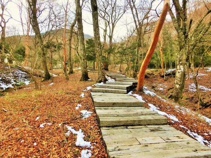 家族で散策をしたい森の遊歩道