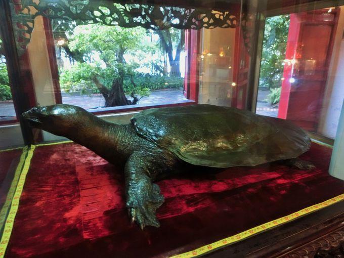 一番の見どころは巨大亀!