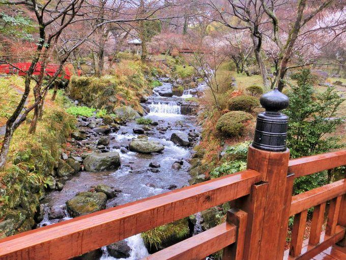 橋越しにみる梅の絶景