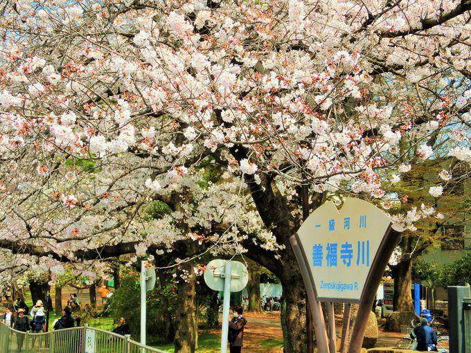 武蔵野の面影を残す善福寺川緑地公園