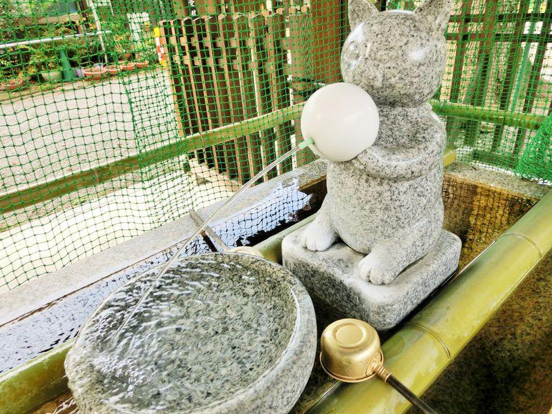 歯の神様「荻窪白山神社」は可愛い猫の石像探しも楽しい!