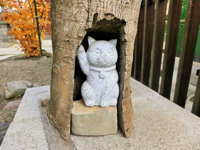木の幹の中に招き猫