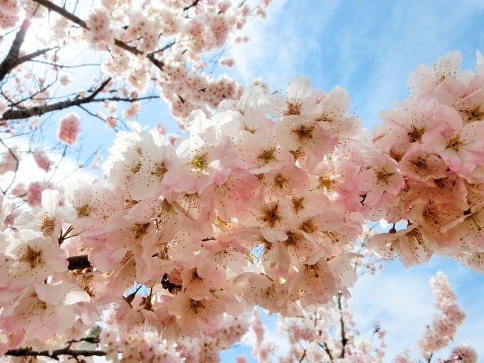 たくさんの春を見つけてみよう!