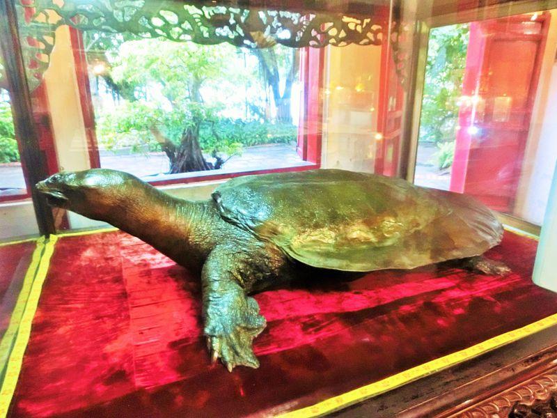 伝説の大亀はなんと2メートル!?ベトナム・ハノイ「玉山祠」