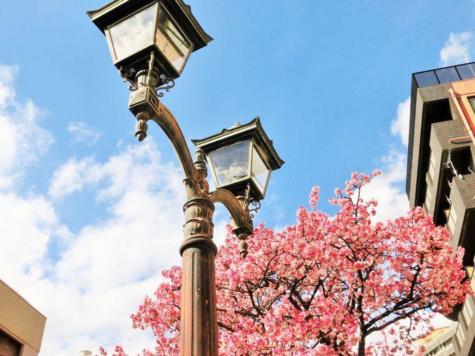ガス燈と桜