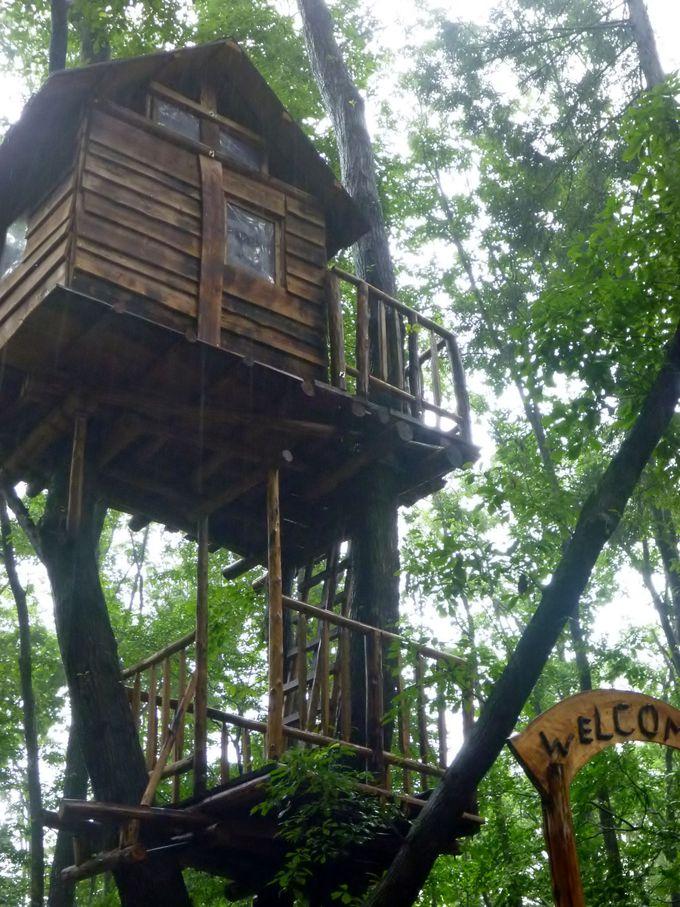 堂々完成のツリーハウスで思いっきり遊んじゃおう!里山地区「森の楽校」