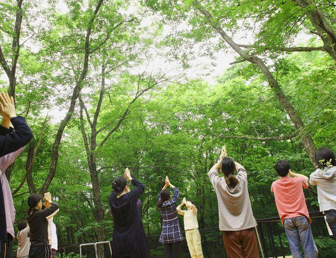 新鮮な空気を体いっぱいに!森の朝ヨガで目覚めよう!