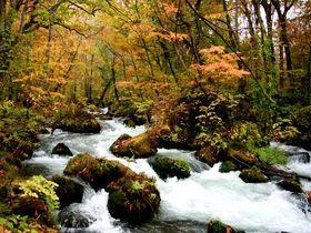 日本一美しい渓流! 「奥入瀬渓流」を100%楽しむならば、やっぱりベストは紅葉シーズン!!