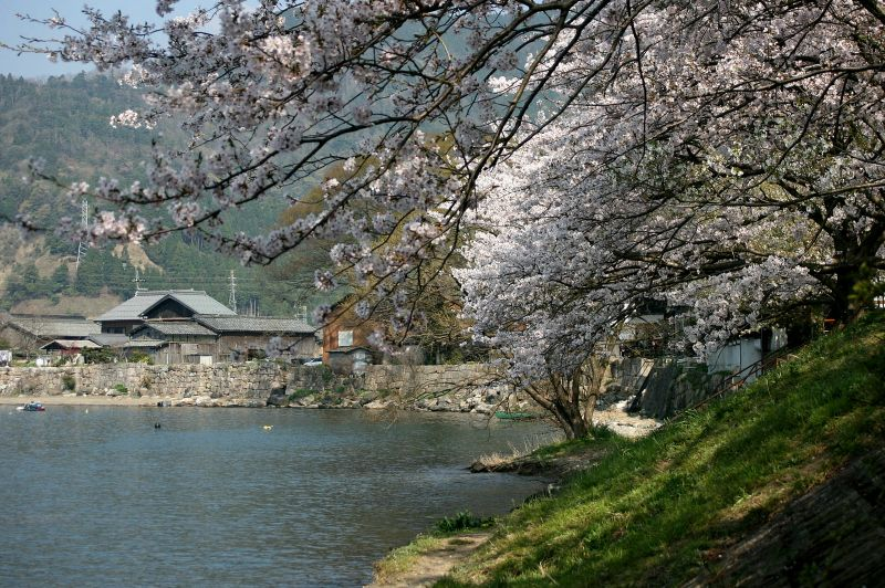 桜並木から続く、江戸時代の石積み堤防
