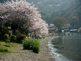海津桜とご一緒に!江戸時代の堤防が残る琵琶湖北岸の水の郷「海津集落」