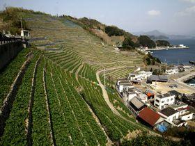 海を望む急斜面に連なる石垣の美!宇和島「遊子水荷浦の段畑」