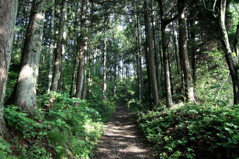 春日山城の表玄関「大手道」から登城しよう