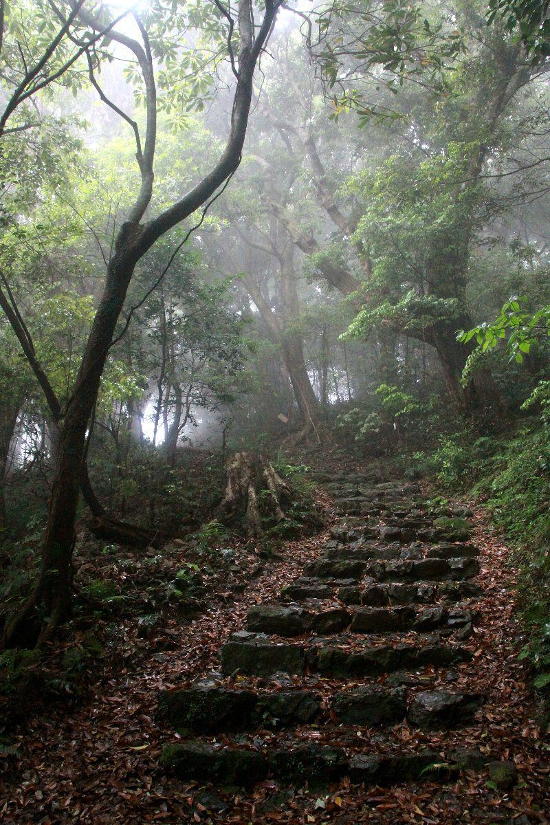 亜熱帯植物が茂る室戸岬の遍路道「最御崎寺道」