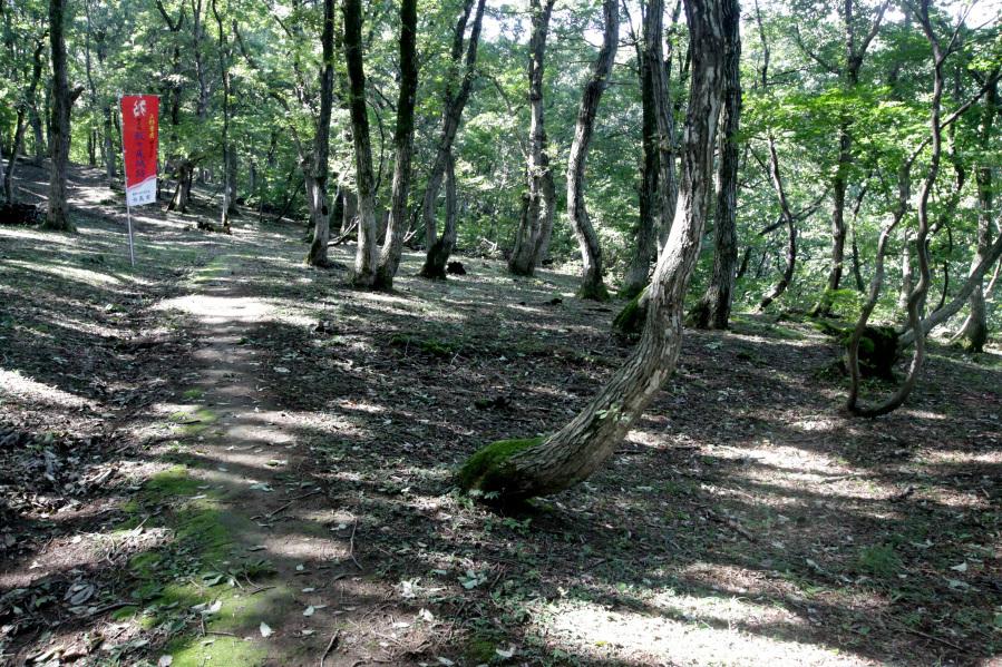最大の集落「矢代山B地区」には二重の環濠が巡る!