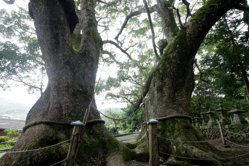 三島神社で語られる「カノー伝説」