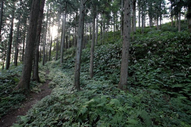 「中世遺構散策コース」を歩いて山城の雰囲気を楽しもう!