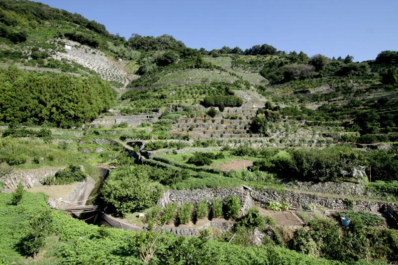 集落を取り囲む斜面に築かれた広大な段畑!