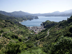 宇和海を臨む斜面に連なる石垣!愛媛県西予市「狩浜の段畑」