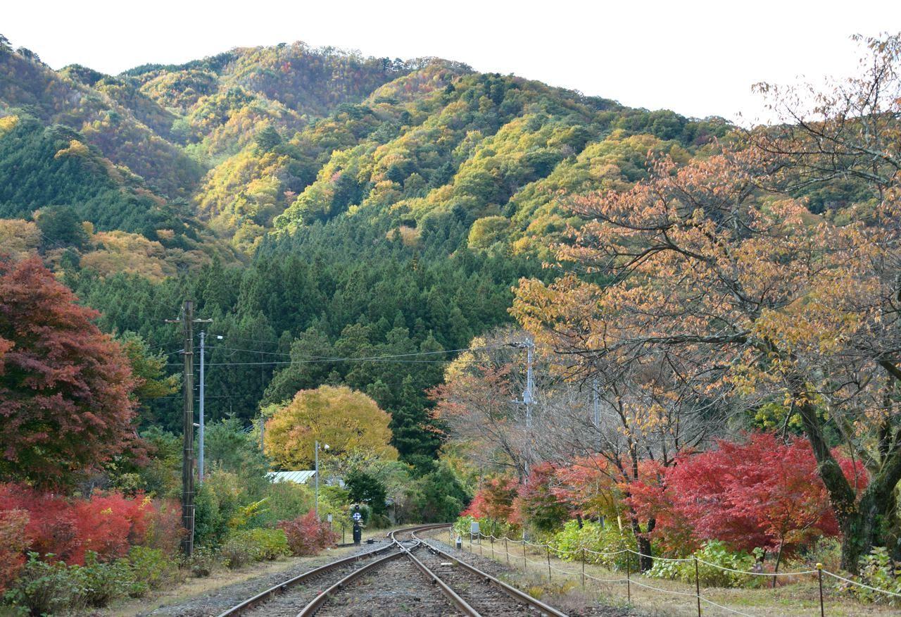 神戸(ごうど)から下り列車で沿線の紅葉を楽しもう