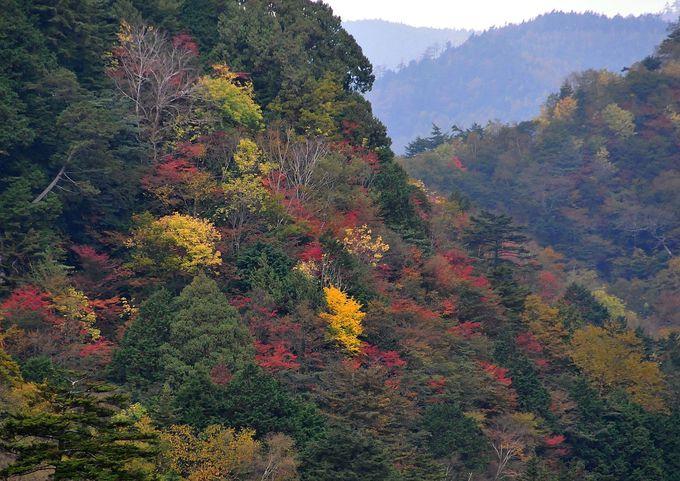緑があるから紅葉が映える、絶妙なパッチワーク状の光景。滝に続いて紅葉を満喫!