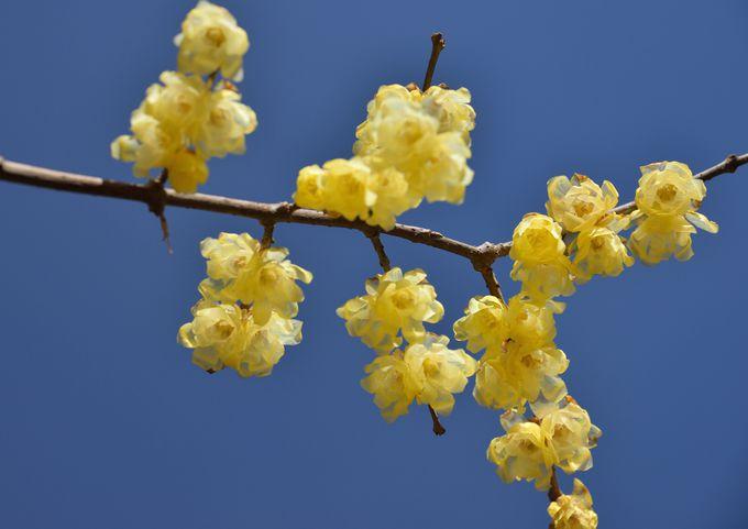 園内には28品種、約100本の梅の木が比較的狭い範囲に植栽! 園内梅林を目指そう。