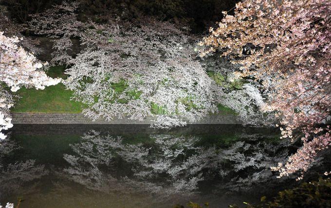 千鳥ヶ淵緑道はまさに「夜桜街道」!開花期からライトアップで、豪華な桜を見よう