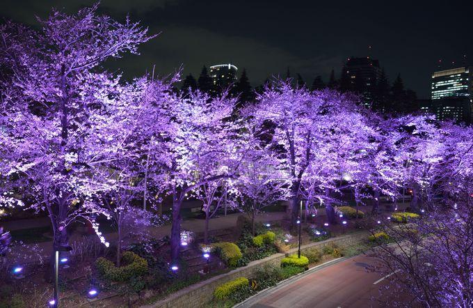 東京ミッドタウンは2色LEDのライトアップで「疑似満開」が楽しめるスポット