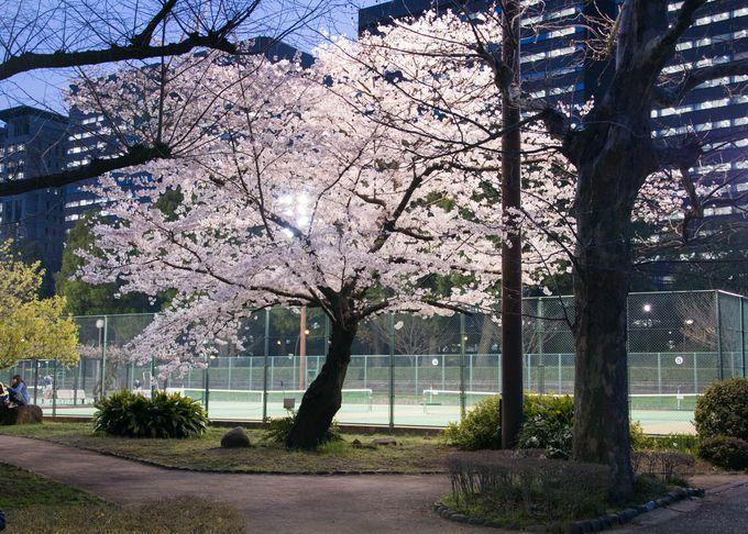 日比谷公園の夜桜はライトアップ無し!意外と清楚で上品な佇まいが魅力
