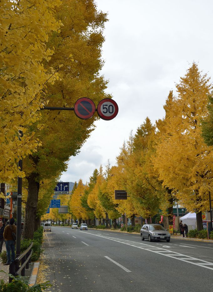 JR中央線高尾駅前、甲州街道沿い銀杏並木は端正に整備!