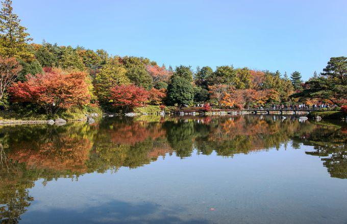 昭和記念公園は紅葉の宝庫 いちょうともみじを存分に楽しもう