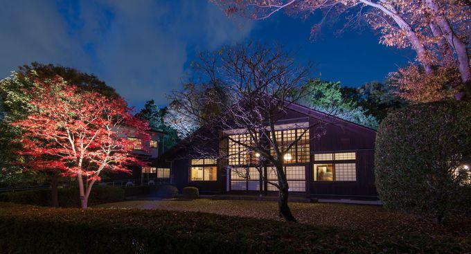 小金井公園は紅葉のライトアップが開催。昭和の建物と紅葉のコラボレーションを撮ろう