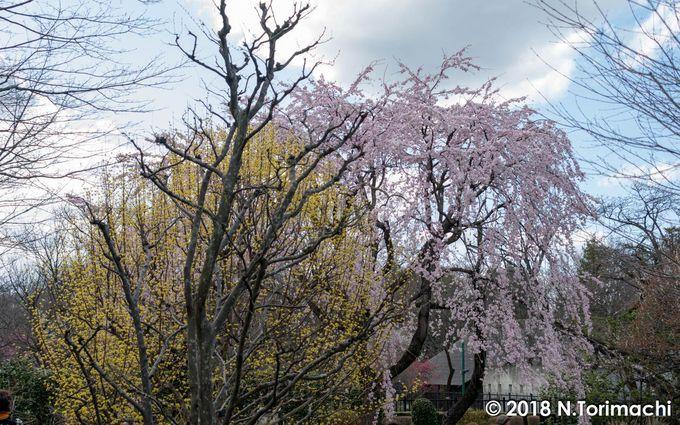 四季を通じて、絵になる建物! 春は桜と絡めると素晴らしい