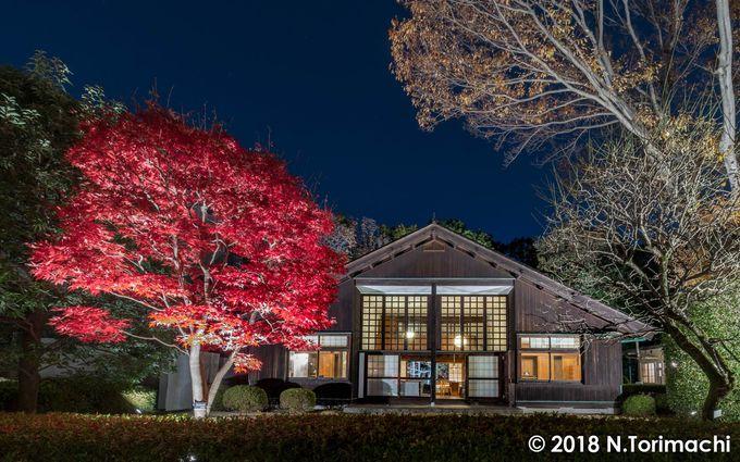 秋の紅葉ライトアップ、延長開園は一度は行ってみたいイベント!