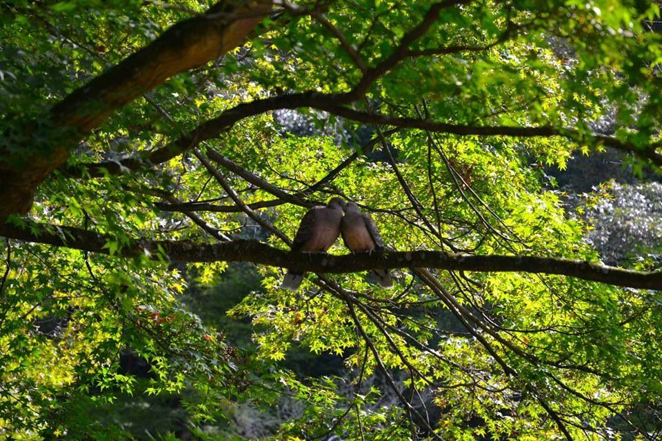 静寂の中に身を置き、自然に耳を澄ます