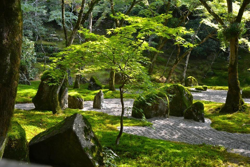 木々と苔の美しさが眩しい程に際立つ庭園