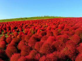 秋に行きたい!人気日帰りバスツアーランキングTOP15【東京発ほか関東・首都圏編】
